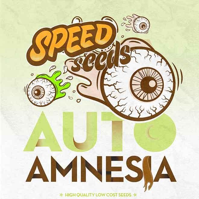 AMNESIA AUTO (SPEED SEEDS) - Speed Seeds - Seed Banks