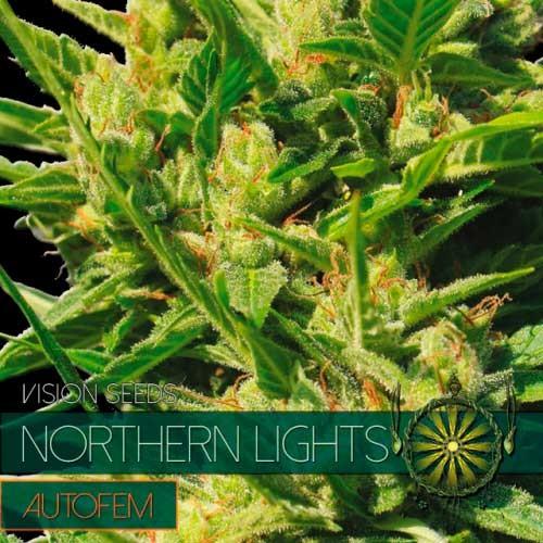 NORTHERN LIGHTS AUTO - Vision Seeds - Seed Banks