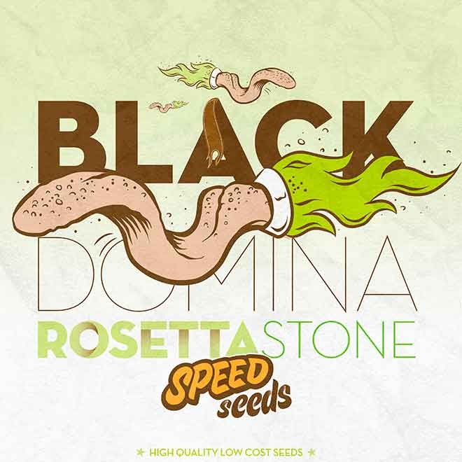 BLACK DOMINA X ROSETTA STONE - Speed Seeds - Seed Banks