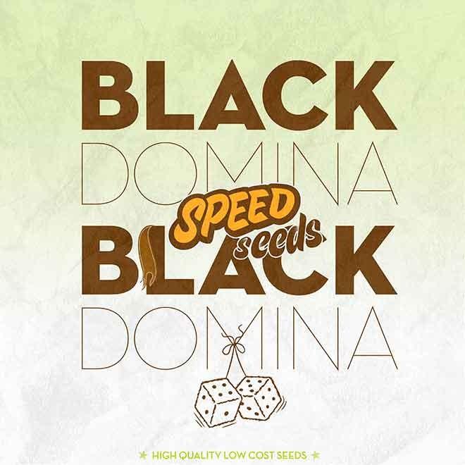 BLACK DOMINA X BLACK DOMINA - Speed Seeds - Seed Banks