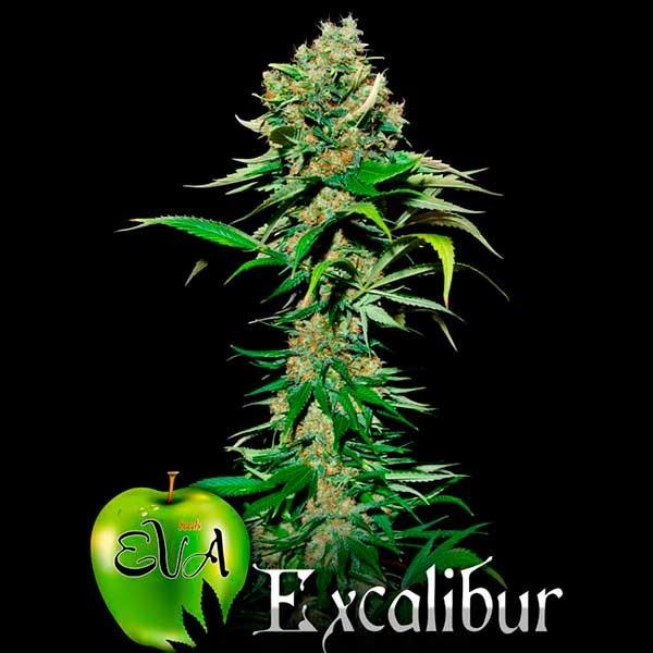 EXCALIBUR - Eva Seeds - Seed Banks