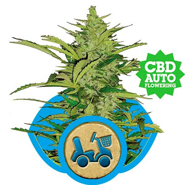 Fast Eddy Automatic - Royal Queen Seeds - Seed Banks