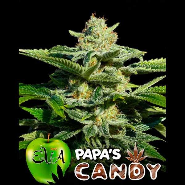 PAPA'S CANDY - Eva Seeds - Seed Banks
