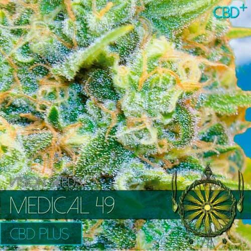 MEDICAL 49 CBD+ - Vision Seeds - Seed Banks