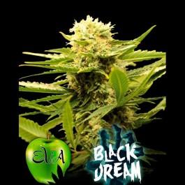BLACK DREAM - Samsara Seeds - Eva Seeds