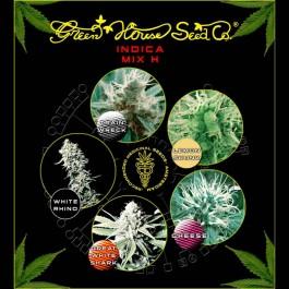 Indica Mix H - Samsara Seeds - GreenHouse