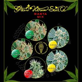 Rasta Mix  - Samsara Seeds - GreenHouse