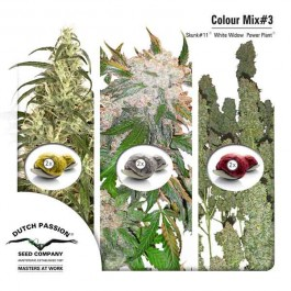 Colour Mix 3 - Samsara Seeds - Samsara Seeds