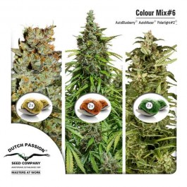 Colour Mix 6 (AutoFem) - Samsara Seeds - Dutch Passion