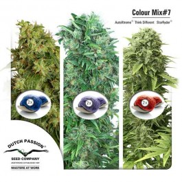 Colour Mix 7 (AutoFem) - Samsara Seeds - Dutch Passion