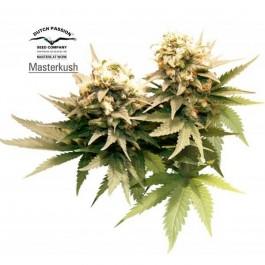 MASTER KUSH - Samsara Seeds - Dutch Passion