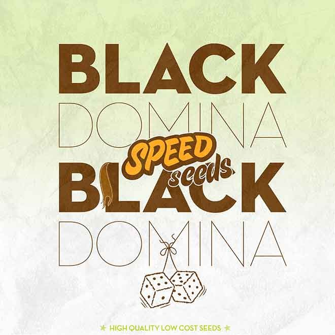 BLACK DOMINA X BLACK DOMINA - Speed Seeds - Seed Banks