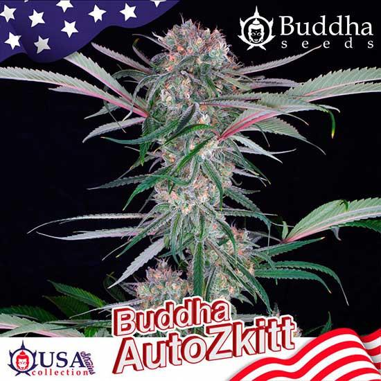 BUDDHA AUTO ZKITT - Buddha Seeds - Seed Banks