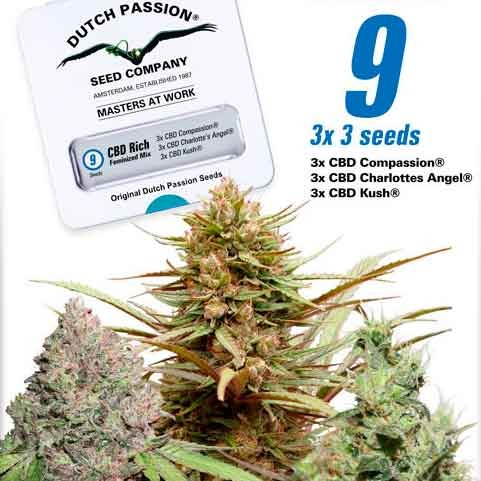 CBD Feminized Mix - Dutch Passion - Seed Banks