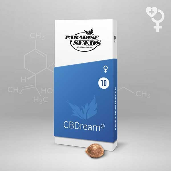 CBDream - Paradise Seeds - Seed Banks