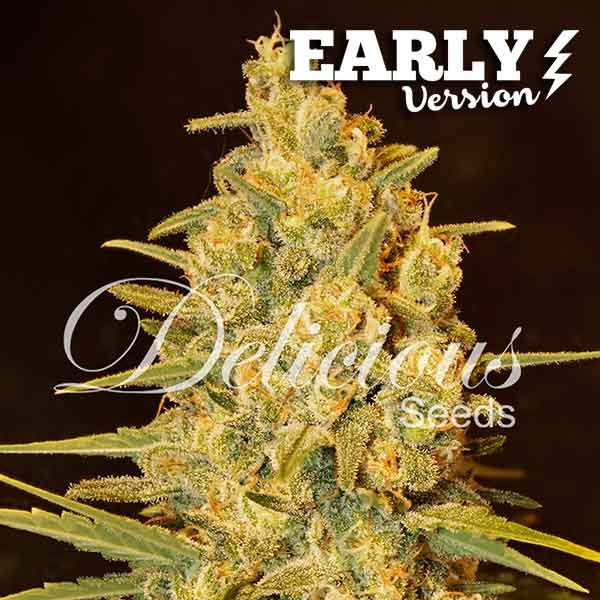 Critical Sensi Star Early Version - Delicious Seeds - Seed Banks