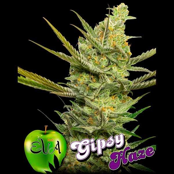 GIPSY HAZE - Eva Seeds - Seed Banks