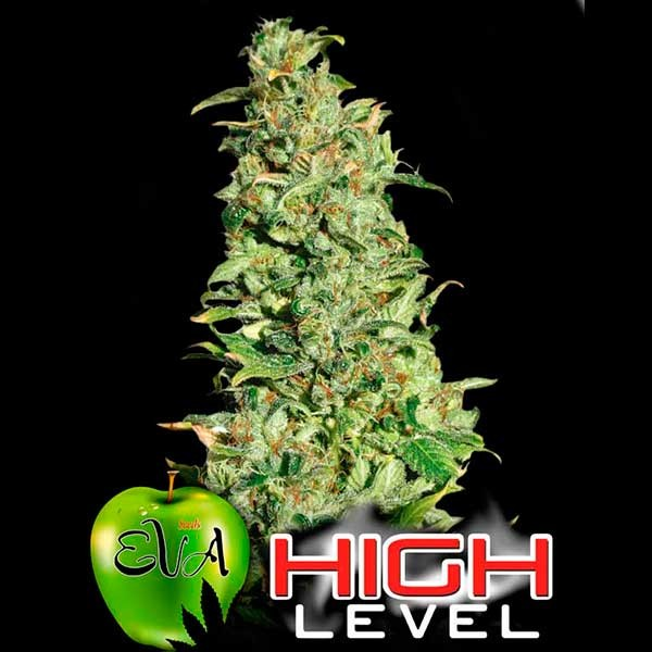 HIGH LEVEL - Eva Seeds - Seed Banks