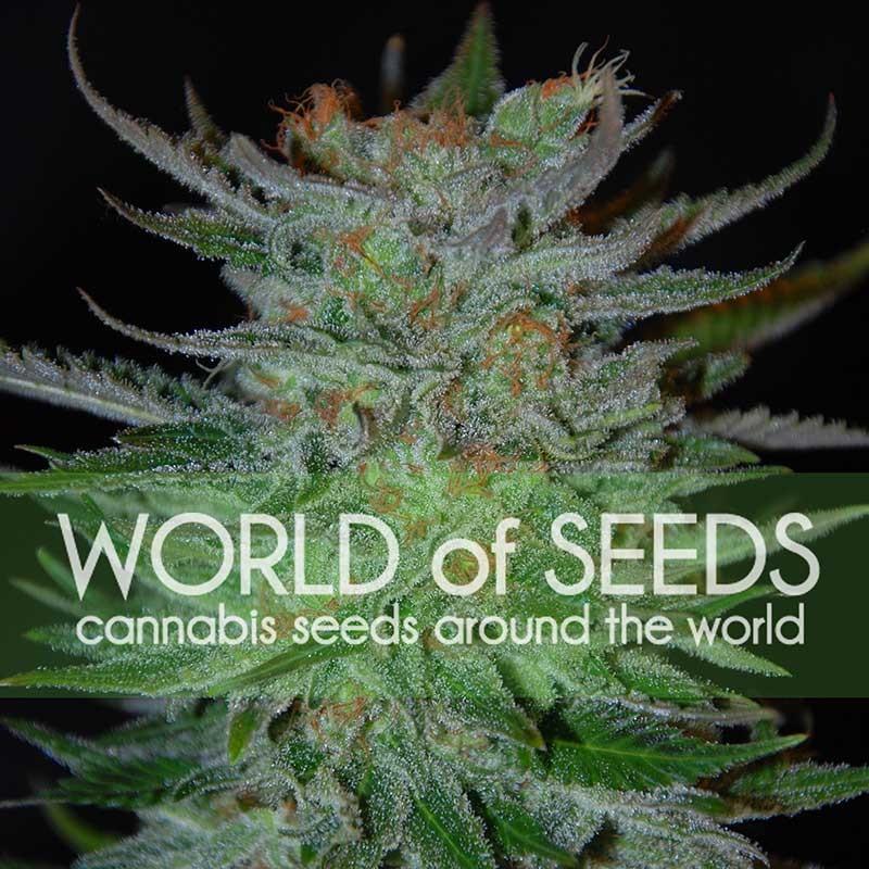 New York 47 - World of Seeds - Seed Banks