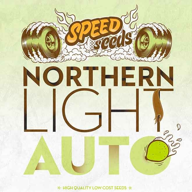 NORTHERN LIGHT AUTO - Speed Seeds - Seed Banks