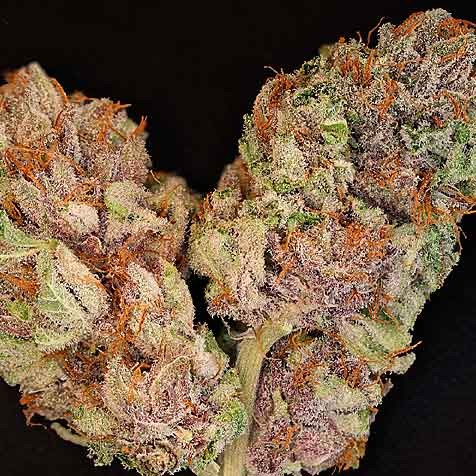 The OX  - 12 Seeds - Rare Dankness - Seed Banks