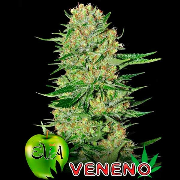 VENENO - Eva Seeds - Seed Banks