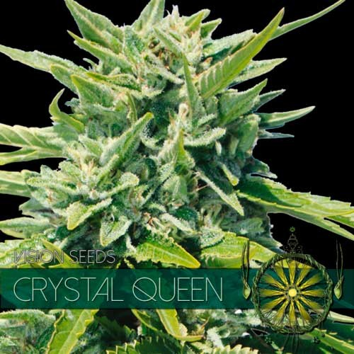 CRYSTAL QUEEN - Vision Seeds - Seed Banks