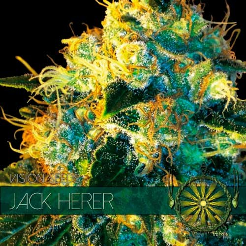JACK HERER - Vision Seeds - Seed Banks