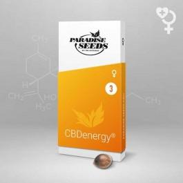 CBDenergy - Samsara Seeds - Paradise Seeds