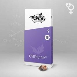 CBDivine - Samsara Seeds - Paradise Seeds