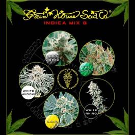 Indica Mix G - Samsara Seeds - GreenHouse