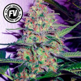 Green Poison Fast Version - Samsara Seeds - Sweet Seeds