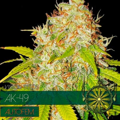 AK-49 AUTO - Vision Seeds - Seed Banks