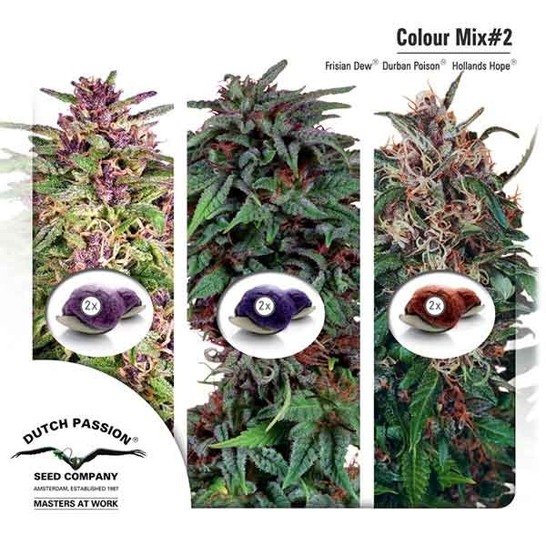 Colour Mix 2 - Dutch Passion - Seed Banks