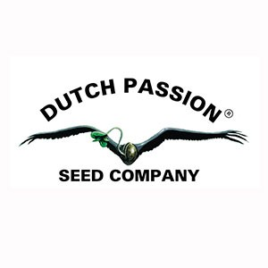 Power Light #3 - 3 Seeds Fem - Dutch Passion - Seed Banks