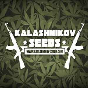 Power Russian  - Kalashnikov - Seed Banks
