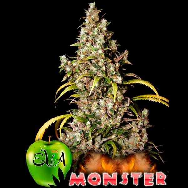 MONSTER - Eva Seeds - Seed Banks