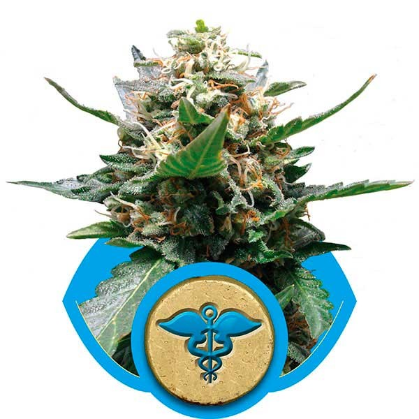 Royal Medic - Royal Queen Seeds - Seed Banks