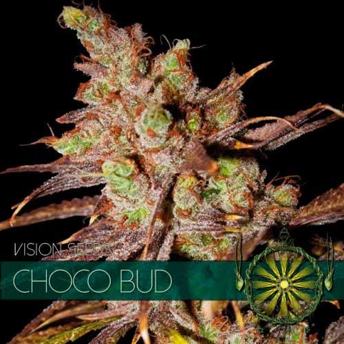 CHOCO BUD - Vision Seeds - Seed Banks