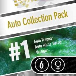 AUTO COLLECTION PACK #1  - Samsara Seeds - Paradise Seeds