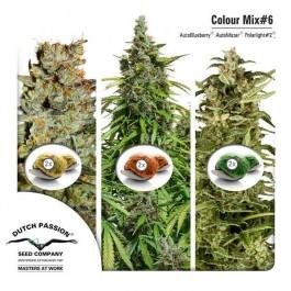 Colour Mix 6 (AutoFem) - Samsara Seeds - Dutch Passion