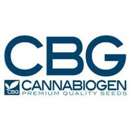 LesHaze Regular - 10 seeds - Samsara Seeds - Cannabiogen