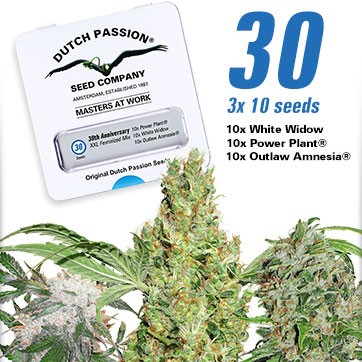 30th Anniversary Mix - Dutch Passion - Seed Banks