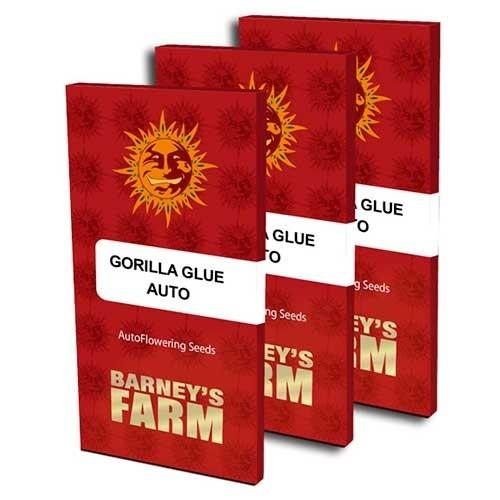 GORILLA GLUE AUTO - Barney's Farm - Seed Banks