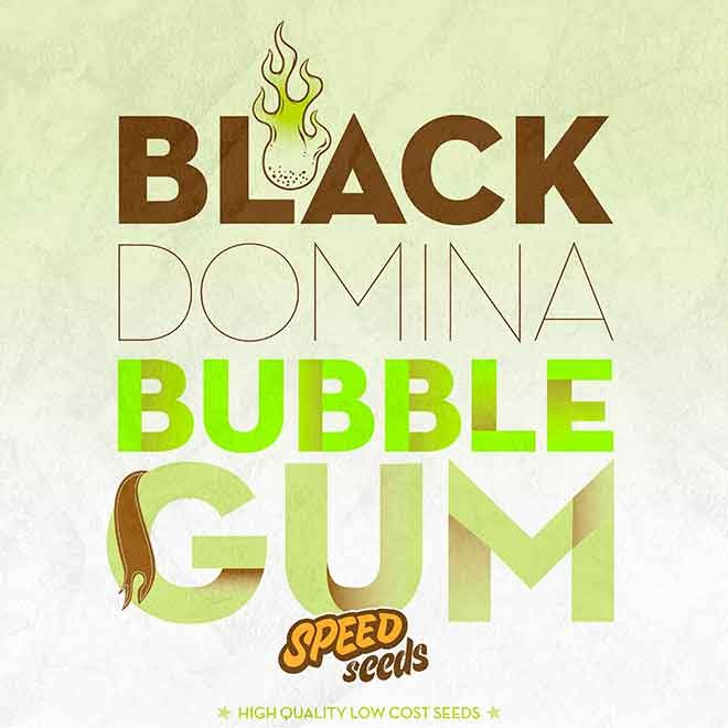 BLACK DOMINA X BUBBLE GUM - Speed Seeds - Seed Banks