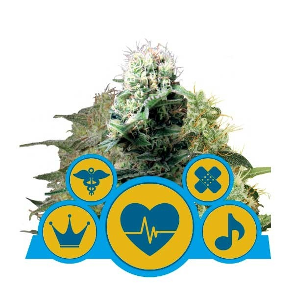 CBD Mix - Royal Queen Seeds - Seed Banks