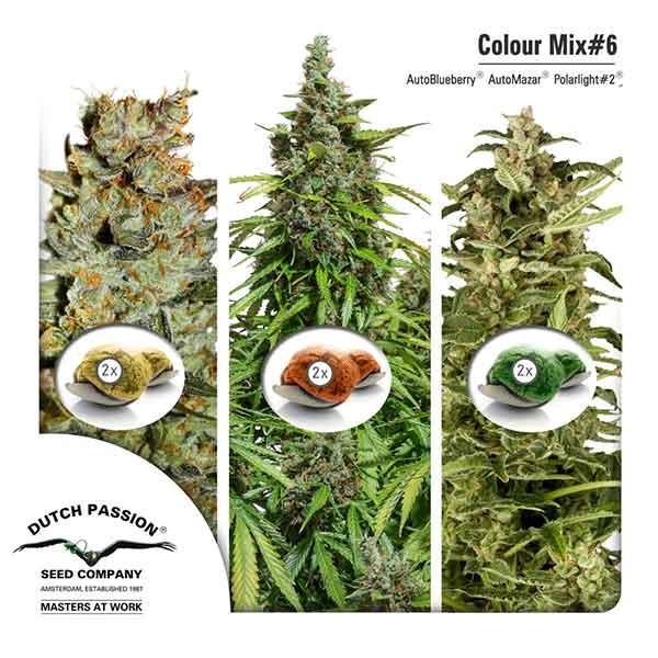 Colour Mix 6 (AutoFem) - Dutch Passion - Seed Banks