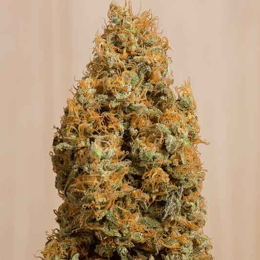 Green Crack CBD - Humboldt Seeds - Seed Banks
