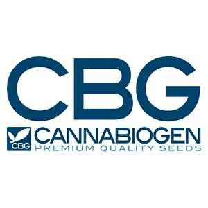 Mangobiche regular - 10 seeds - Cannabiogen - Seed Banks