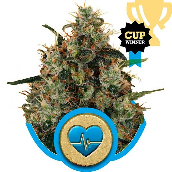 Medical Mass - Royal Queen Seeds - Seed Banks